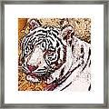 White Tiger Twist Framed Print