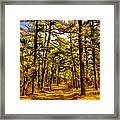 Whitebog Village Woods In New Jersey  Framed Print
