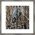 Who Is There - Great Blue Heron Framed Print