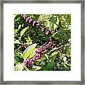 Wild Beautyberry Bush Framed Print