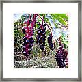 Wild Berry Framed Print