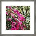 Wild Bougainvillea Framed Print