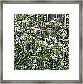 Wild Caraway And Old Fence Framed Print