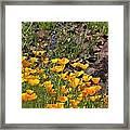 Wild Flower And Rocks Framed Print