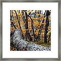Wild Forest Framed Print