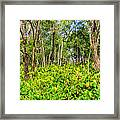 Wild Ginger And Ohia Trees Framed Print