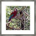 Wild Hawaiian Parrot  Framed Print