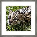 Wild Ocelot Framed Print
