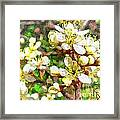 Wild Plum Flower Framed Print