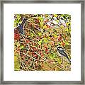 Wild Red Berrie Bush With Birds - Digital Paint Framed Print