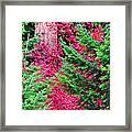 Wild Red Maple Framed Print