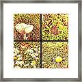 Wild Things Growing Near The Beach Framed Print