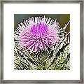 Wild Thistle  Framed Print