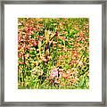 Wild Unfettered Beauty Framed Print