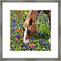Wildflower Feast Framed Print
