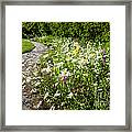 Wildflower Garden And Path To Gazebo Framed Print