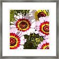 Wildflowerd Wide 1 Framed Print