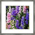 Wildflowers #15 Framed Print