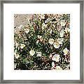 Wildflowers - Desert Primrose Framed Print