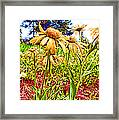 Wildflowers In The Wilds Of Colorado Framed Print