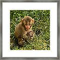 Will You Play With Me Framed Print
