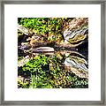 Williams River Reflections Framed Print by Thomas R Fletcher