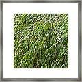 Windswept Cattails Framed Print