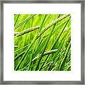 Windy Green Framed Print