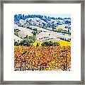 Wine Country Napa C.a. Framed Print