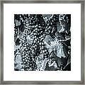 Wine Grapes Bw Framed Print