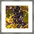 Wine Grapes Framed Print