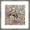 Winged Trio Framed Print