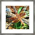 Winged Wonder Framed Print