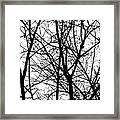 Winter 15 Framed Print