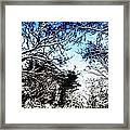 Winter Along The Bronx River Framed Print