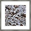 Winter Bald Eagle Framed Print