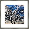 Winter Blue Skys Framed Print