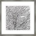Winter Branches Framed Print