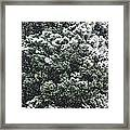 Winter Bush Framed Print