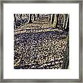 Winter Fall On The Trail Framed Print