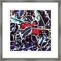 Winter Holly Framed Print