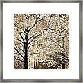 Winter In St. Louis Framed Print by Marty Koch