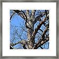 Winter Oak 2014 Framed Print