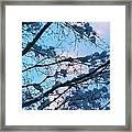 Winter Sky And Snowy Japanese Maple Framed Print