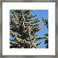 Winter Tale - Featured 3 Framed Print