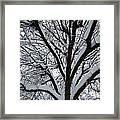 Winter Tree 1 Framed Print