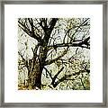 Winter Tree At The  Lake Shore  Framed Print by Ann Powell