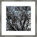 Winter Tree Hill End Nsw Framed Print
