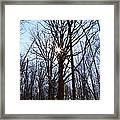 Winter Trees And Sun Framed Print