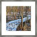 Winter Woods Walk Framed Print